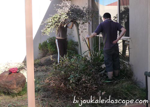 Working in the side courtyard