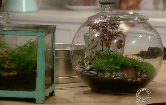 A fishbowl terrarium, via Martha Stewart